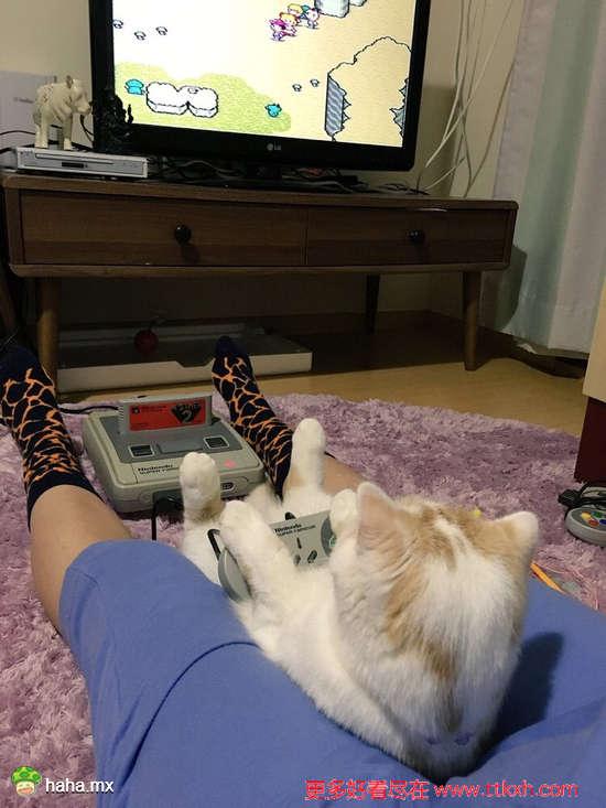 岛国一位主人表示,抱抱猫,打打游戏,大概这就是人生最大的幸福了吧...已羡慕哭