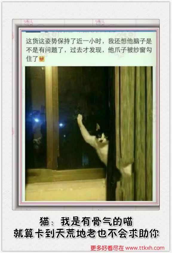 搞笑图片,二货猫咪