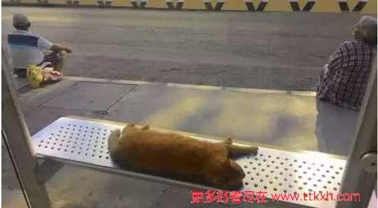 感人图片,一只猫睡在了公交站台的长凳上,路人都不去打扰它