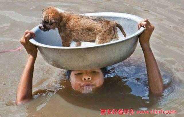 感人图片,发大水女孩将自己的宠物狗顶在头顶